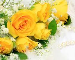 اجمل ورد اصفر في العالم