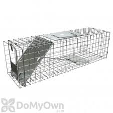 Rabbit Control How To Get Rid Of Rabbits Do My Own