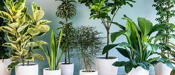 how to grow houseplants palmers