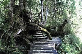深山常有千年樹  Photography 攝影特區