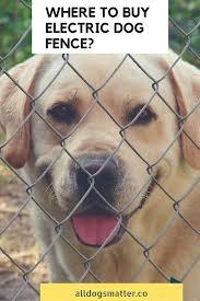 Where To Buy Electric Dog Fence Big Dog Little Dog Dogs Dog Fence