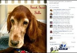 Arkansas special vet clinic forming pet lovers community online   KATV