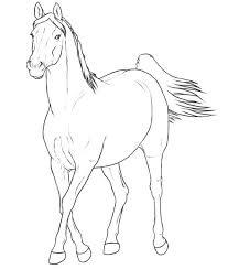 Kids N Fun Kleurplaat Paarden Rassen Arabier Merrie