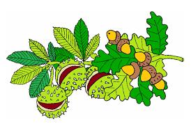 Sběr kaštanů a žaludů – ZŠ logopedická