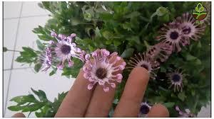 نصائح يجب عليك معرفتها للحفاظ على نباتات الزينة المزهرة و جعل
