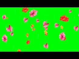 green screen flowers falling down