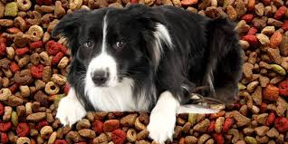 hypoallergenic dog food pros cons