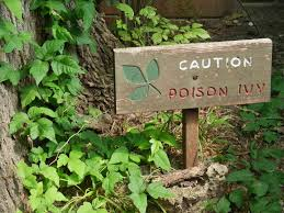 how to treat and prevent poison ivy