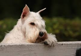 How To Keep A Dog From Escaping The Yard Check Out These Tips