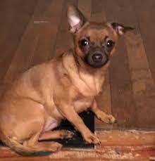 Lost Dog Effie – West Springfield, Massachusetts