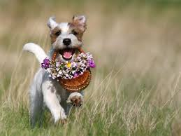 Good boy! | Cute dogs, Parson russell terrier, Dogs