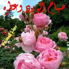 صباح الورد وعطره Posts Facebook