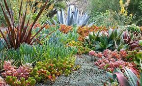 a colorful succulent garden