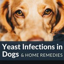 hair loss and itching in dogs