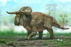 New Dino, Cousin of Triceratops, Discovered | Discover Magazine
