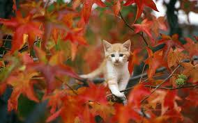 s autumn cats cute