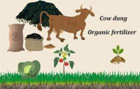 how to make cow dung fertilizer
