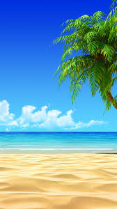 tropical beach coconut tree