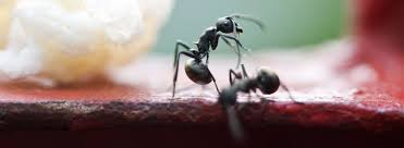 19+ Small Flying Ant With Stinger Pics