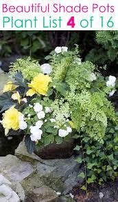16 colorful shade garden pots plant