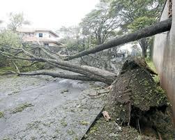 Vendaval deixa um rastro de destruição em BH e Contagem | O TEMPO