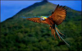 64 macaw wallpaper on wallpapersafari