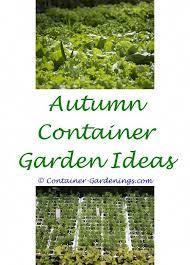 succulent rock garden ideas easy
