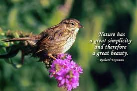 finding beauty in simplicity is a gift from nature quotes
