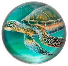 glass dome sea turtle paper weight