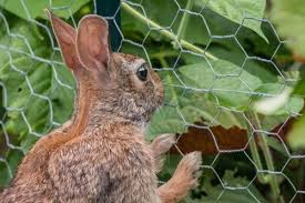 How To Stop Rabbits From Eating Your Plants Fernhill Garden Centre