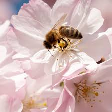 jelajah rimba demi mendulang madu dari sarang lebah liar