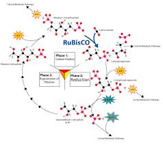 bio tutorial photosynthesis
