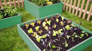 raised bed gardening boxes of veggies
