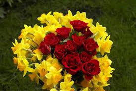 احلى صور ورد روعة وجمال صور الورود كيوت
