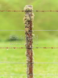 Fence Batten With Fencing Wire And Barbed Wire Old Totara Timber Batten Covered In Lichen Rusty Wire Nz 7 Wire Farm Fencing New Zealand Nz Stock Photo From New Zealand Nz Photos