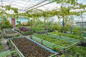 terrace gardening and green roofs