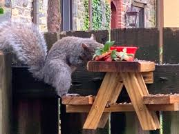 A Man Built A Miniature Picnic Table For His Squirrels Insider