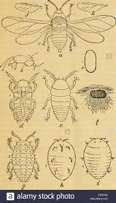 La American entomologo. Entomologia. Entomologo e botanico. 357 ...