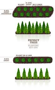 Thuja Green Giant Privacy Screen Plantingtree