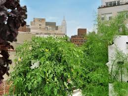 best rooftop gardens and urban farms in