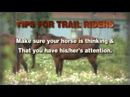 Pin By Farm Safety For Just Kids On Animal Safety Road Safety Pet Safety Horses