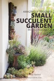 small succulent garden for the birds