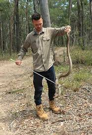 Gold Coast Snake Catcher Lowest Fees Rapid Response 24 Hrs