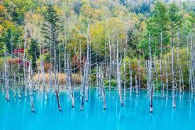 blue pond biei hokkaido a mac