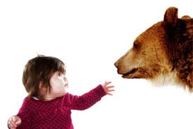 Electric Bear Fences Howstuffworks
