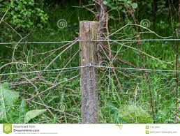 921 Chicken Wire Background Photos Free Royalty Free Stock Photos From Dreamstime