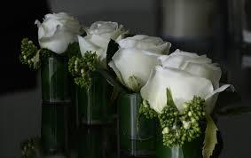 صور لـ ورود جميلة صف راحة إزهار أبيض زهور