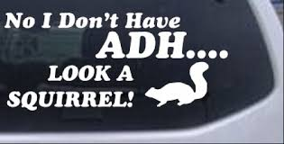 Funny Adhd Look A Squirrel Car Or Truck Window Decal Sticker Rad Dezigns