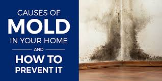 how to spot prevent mold