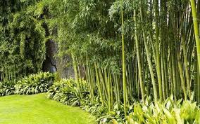 Tips For A Low Maintenance Bamboo Backyard Weather Stationary